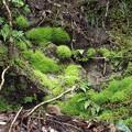 緑三昧・苔むす岩場
